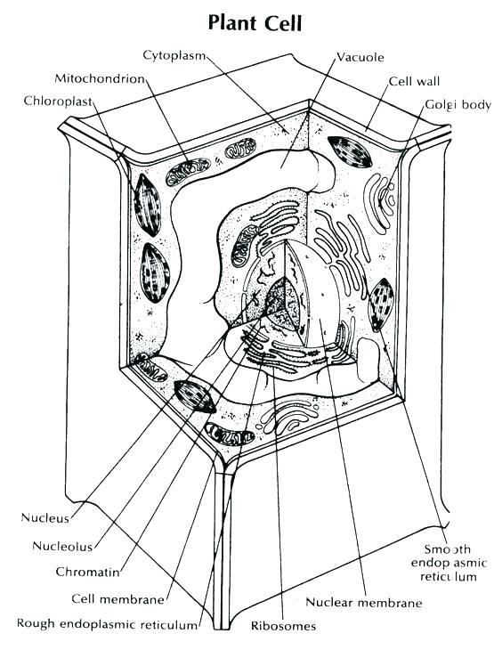 3d plant cell diagram neuron nerve cell diagram prokaryotic cell