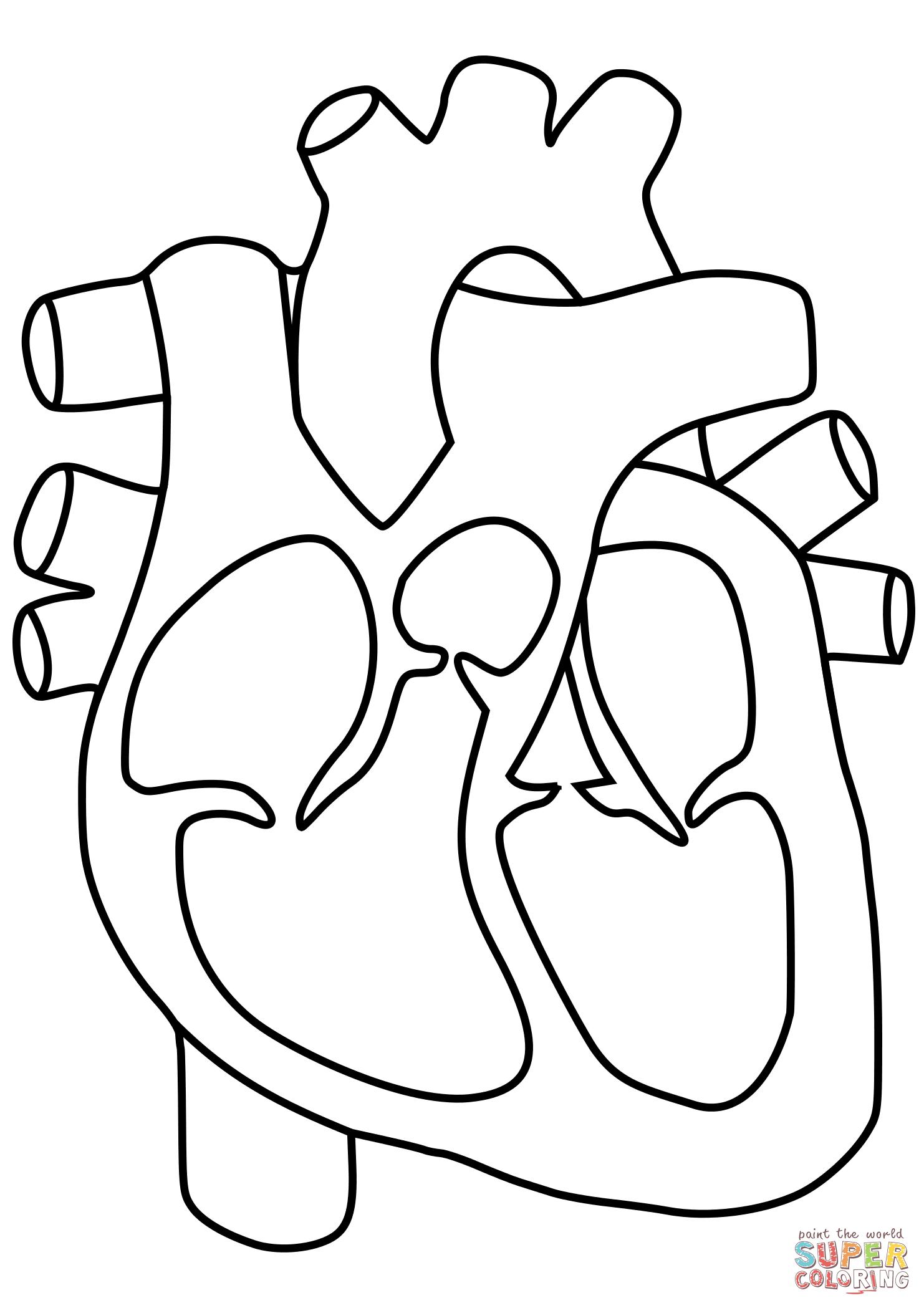 Human Heart Line Drawing At Getdrawings