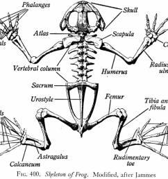 1358x1073 human anatomy charts [ 1358 x 1073 Pixel ]