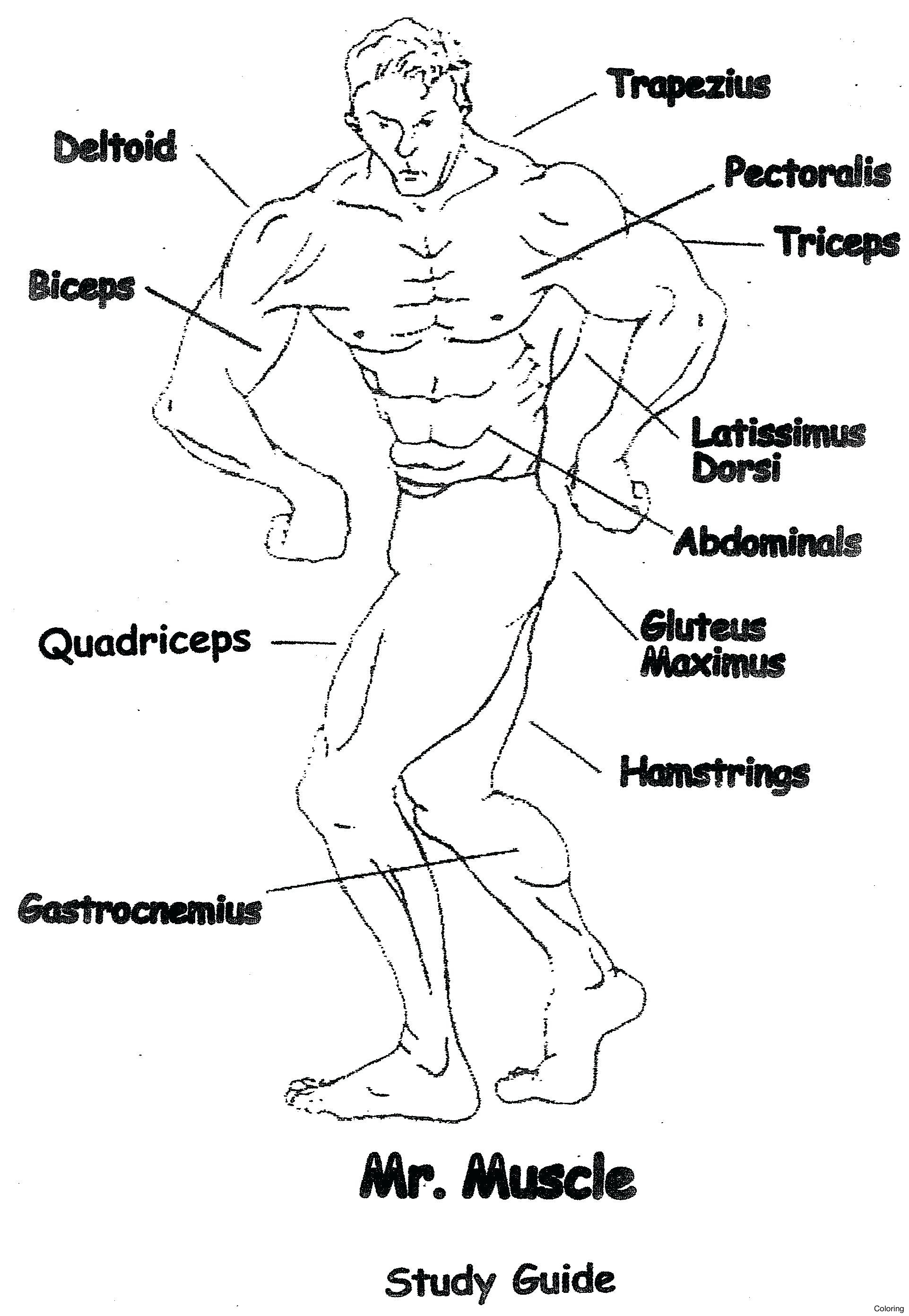 Blank Muscle Worksheet For Anatomy