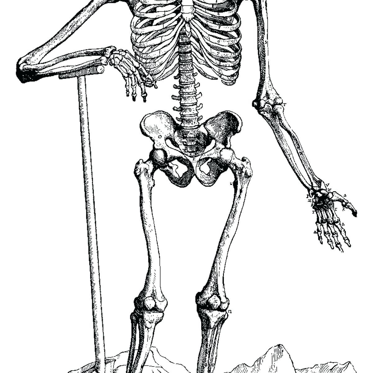 kids skeletal system diagram mk4 golf fan wiring human drawing at getdrawings free