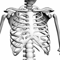 Diagram Of Skeletal Ribs Hss Strat Wiring 1 Volume 2 Tone Human Skeleton Drawing At Getdrawings Free For