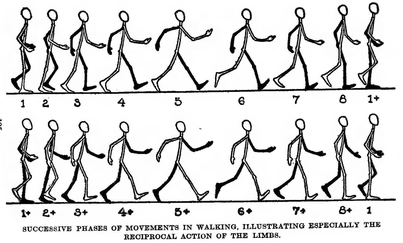 Human Stick Figure Drawing At Getdrawings
