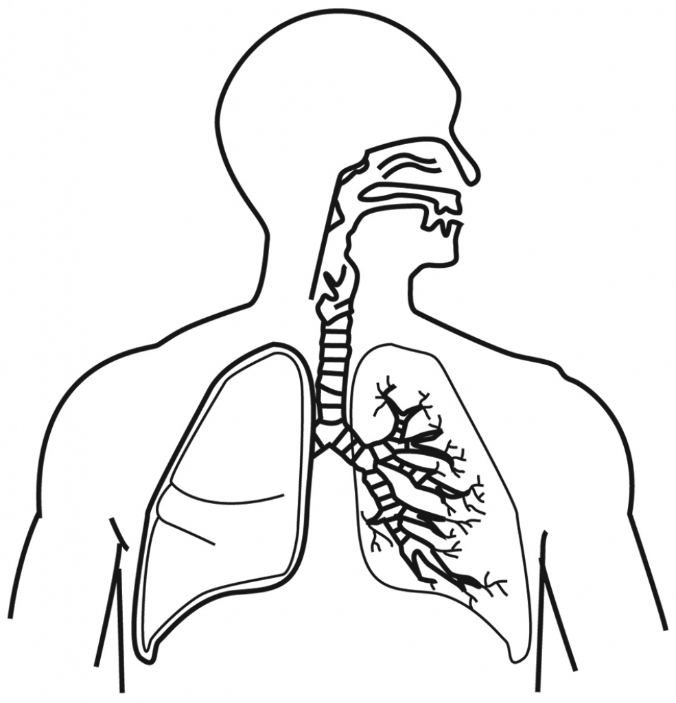 The best free Respiratory drawing images. Download from