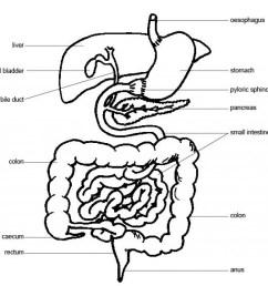 1024x1004 fetal pig anatomy diagram labeled [ 1024 x 1004 Pixel ]