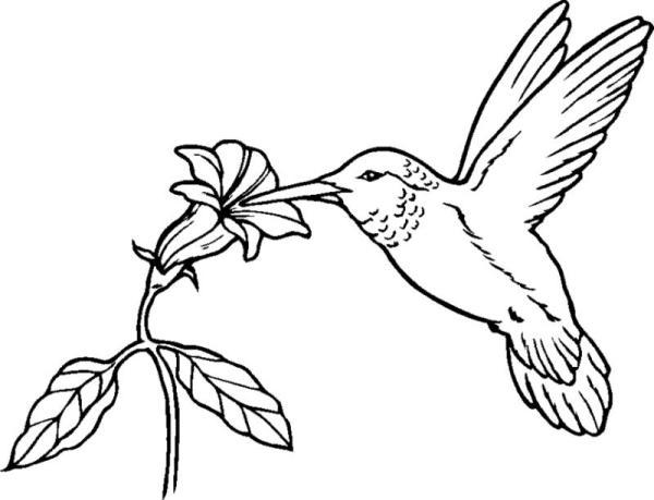 hummingbird drawing clip art