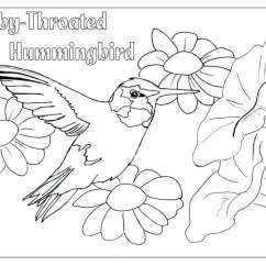 Hummingbird Diagram Of Color Fujitsu Ten Car Stereo Wiring Hummingbirds And Flowers Drawing At Getdrawings Free