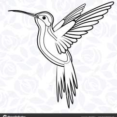 Hummingbird Diagram Of Color 6 Pin Ignition Switch Wiring Hummingbirds And Flowers Drawing At Getdrawings Free