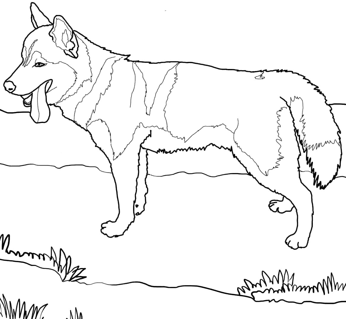 Husky Puppy Drawing At Getdrawings