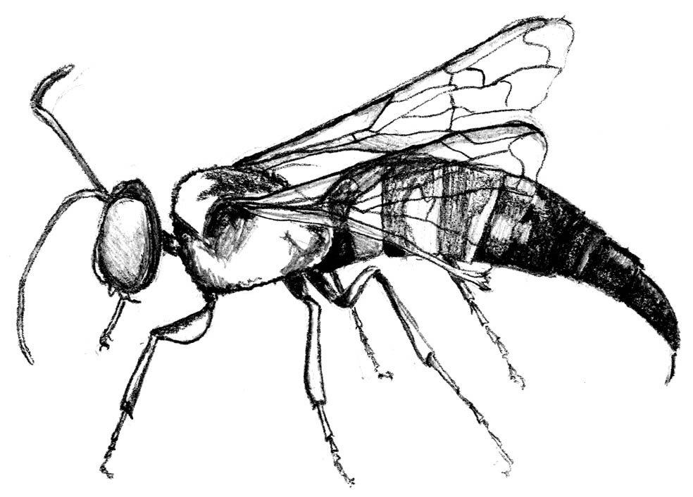 Description Of Bees And Wasps