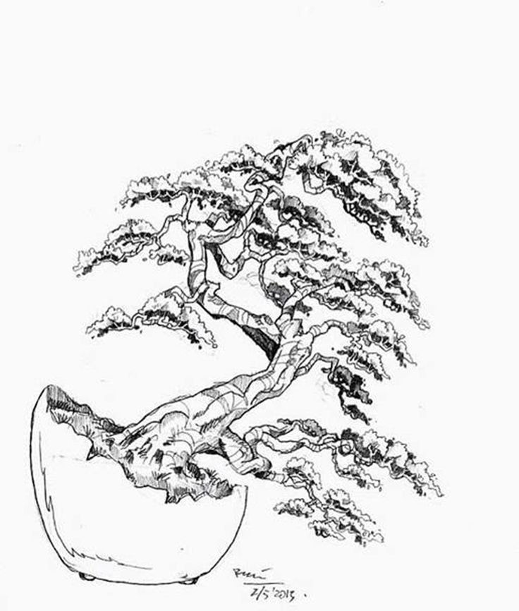 The best free Bonsai drawing images. Download from 50 free