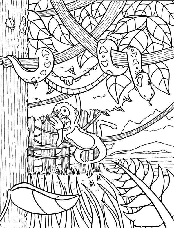 jungle coloring page # 31