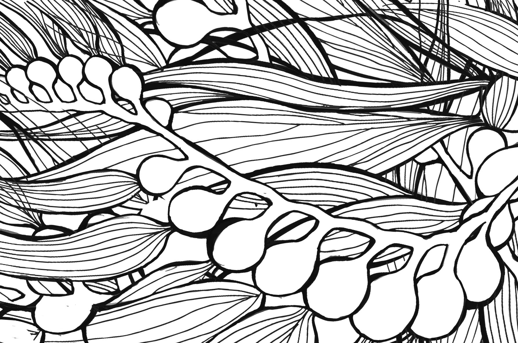 Kelp Drawing At Getdrawings