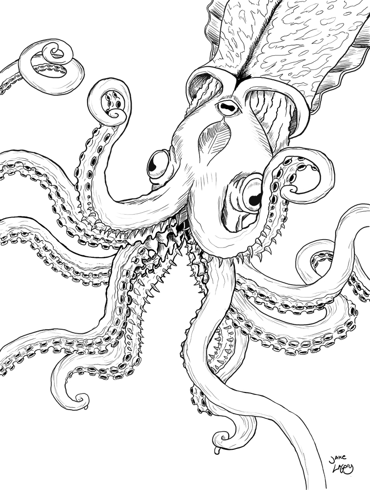 Octopus Line Drawing At Getdrawings Com