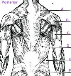 1082x1004 diagram upper arm muscle diagram human leg muscles common names [ 1082 x 1004 Pixel ]