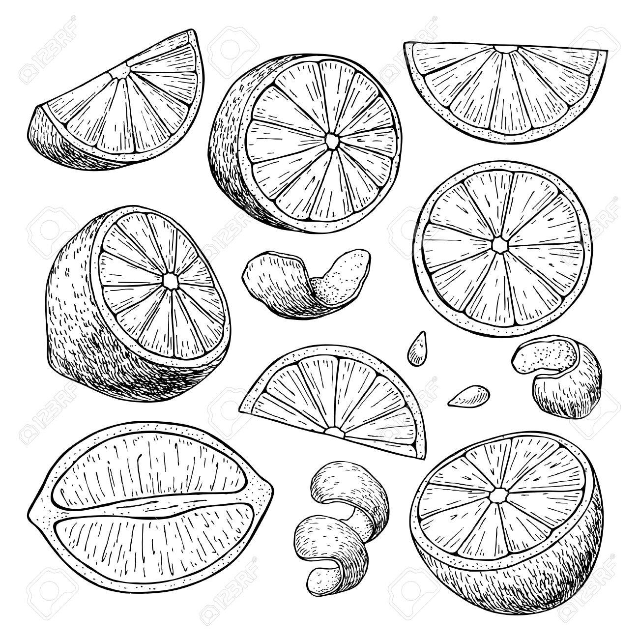 Lemon Slice Drawing At Getdrawings