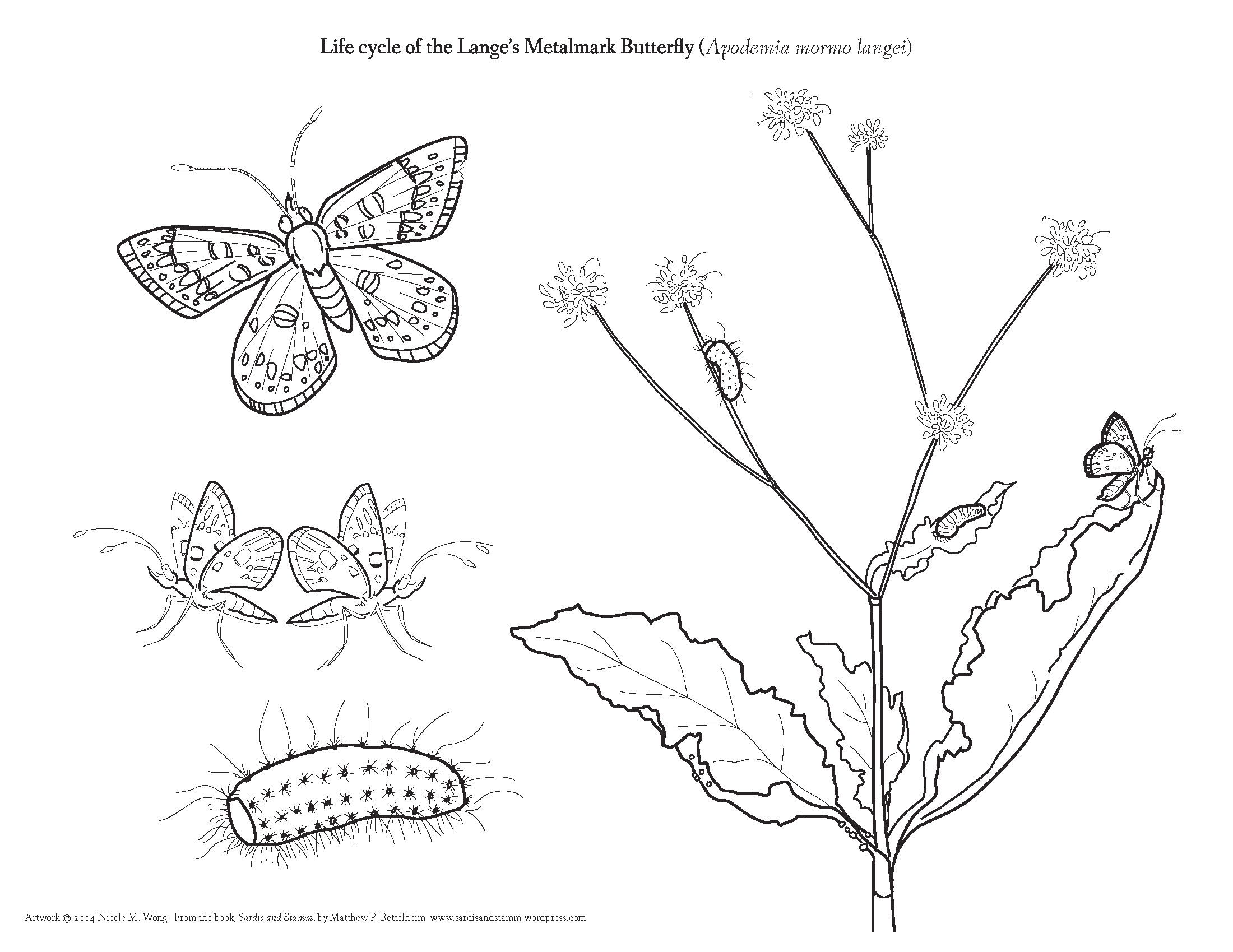 Life Cycle Of A Butterfly Drawing at GetDrawings.com