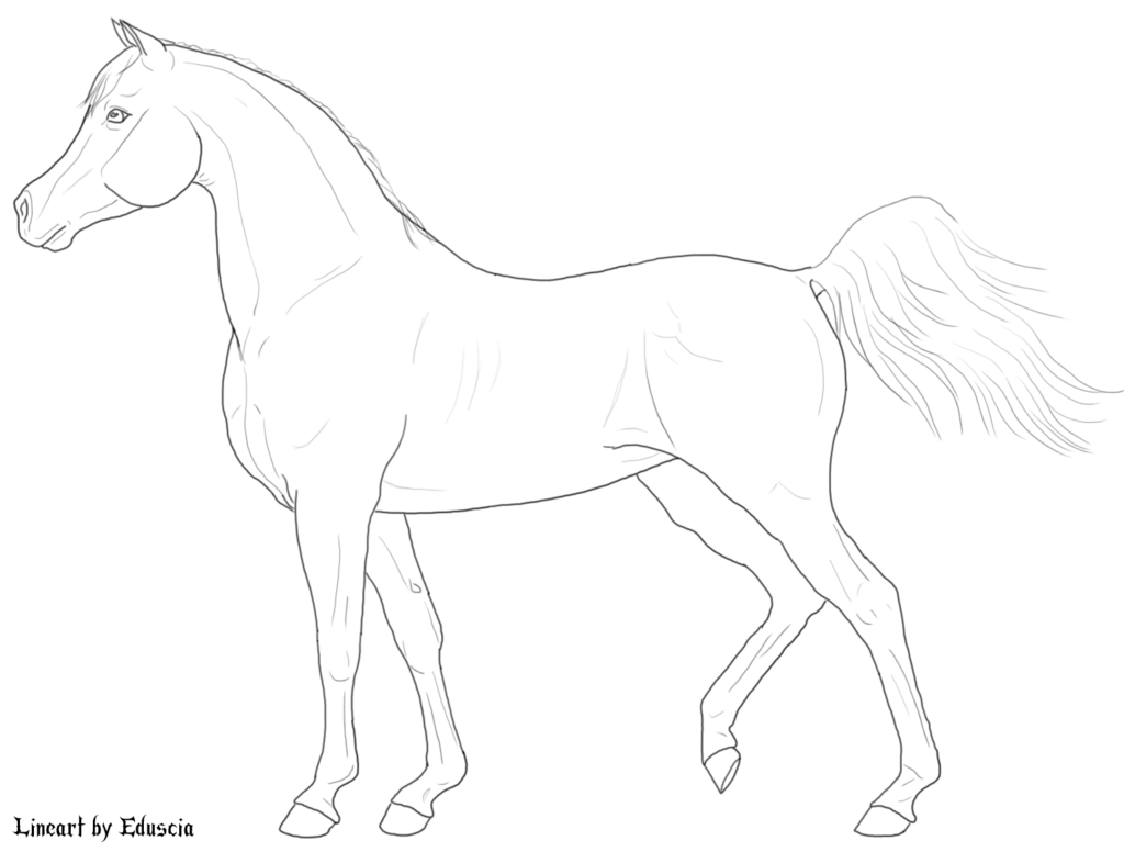 Line Drawing Of A Horse At Getdrawings