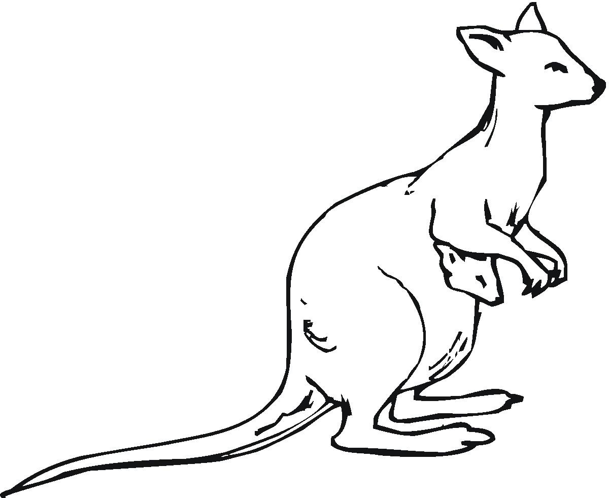 Line Drawing Of A Kangaroo At Getdrawings