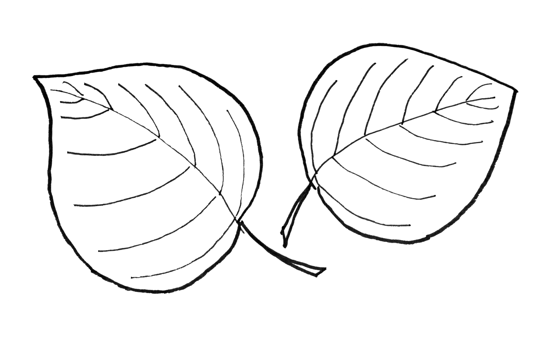 Line Drawing Of A Leaf At Getdrawings