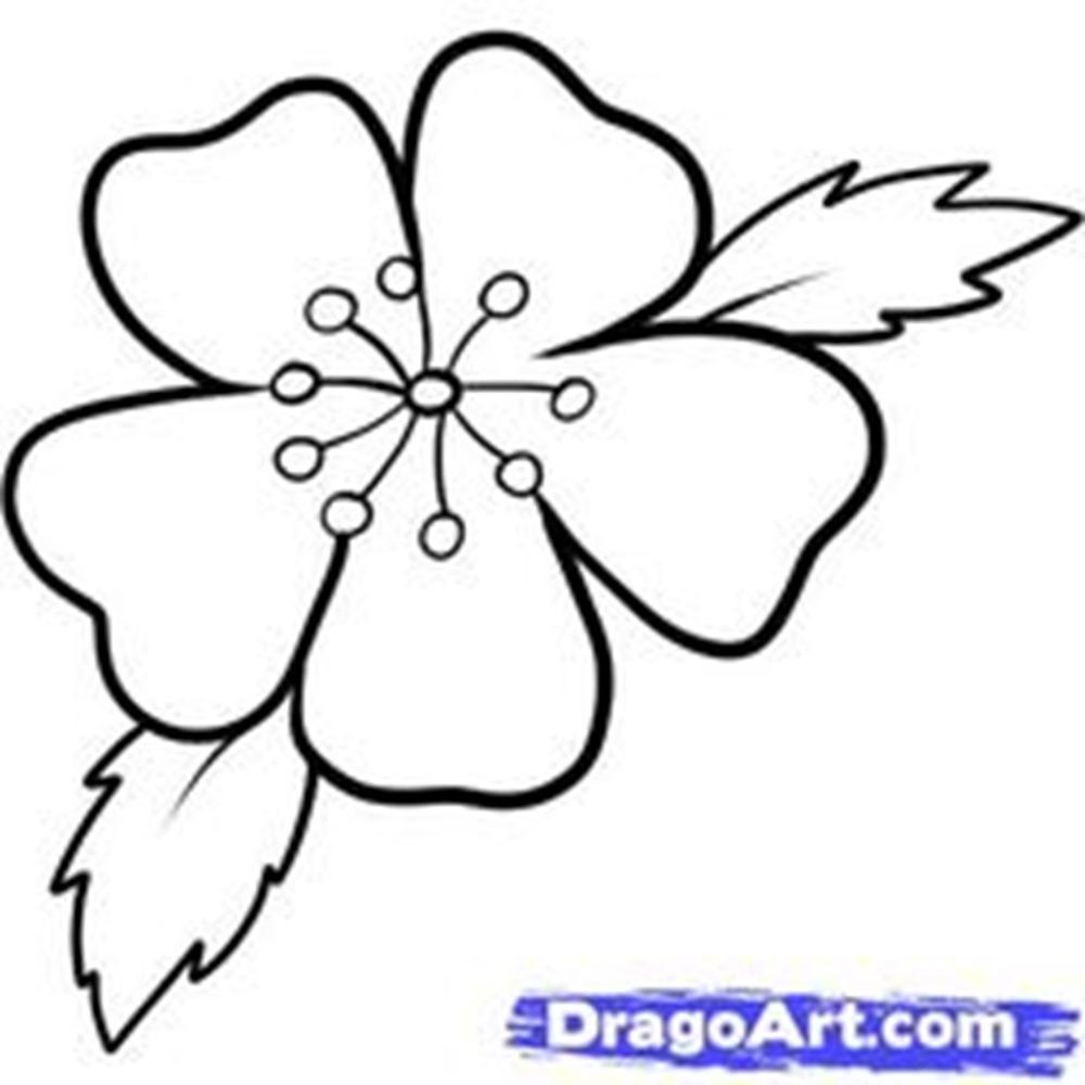 Lotus Flower Sketch Step By Kayaflower Co