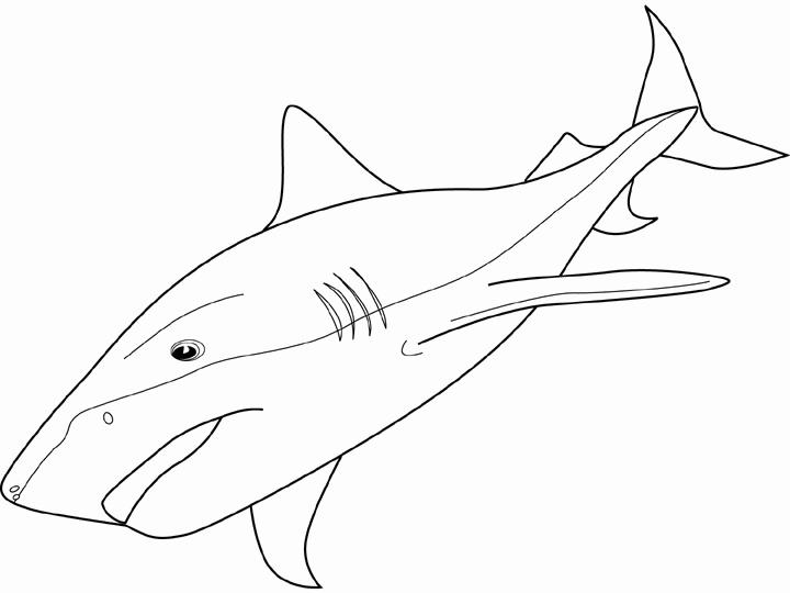 Shortfin Mako Shark Coloring Page