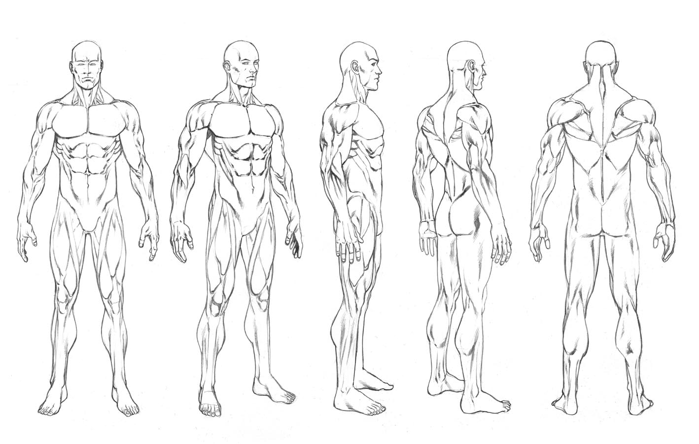Male Body Outline Drawing At Getdrawings