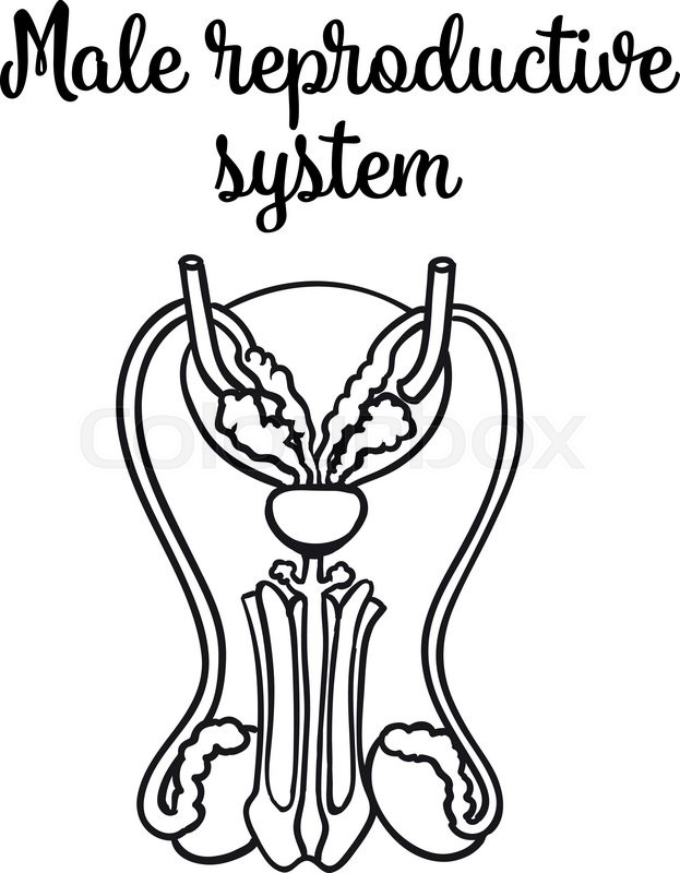 The best free Reproductive drawing images. Download from