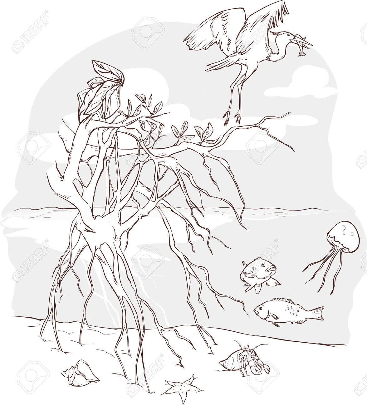 marine ecosystem diagram