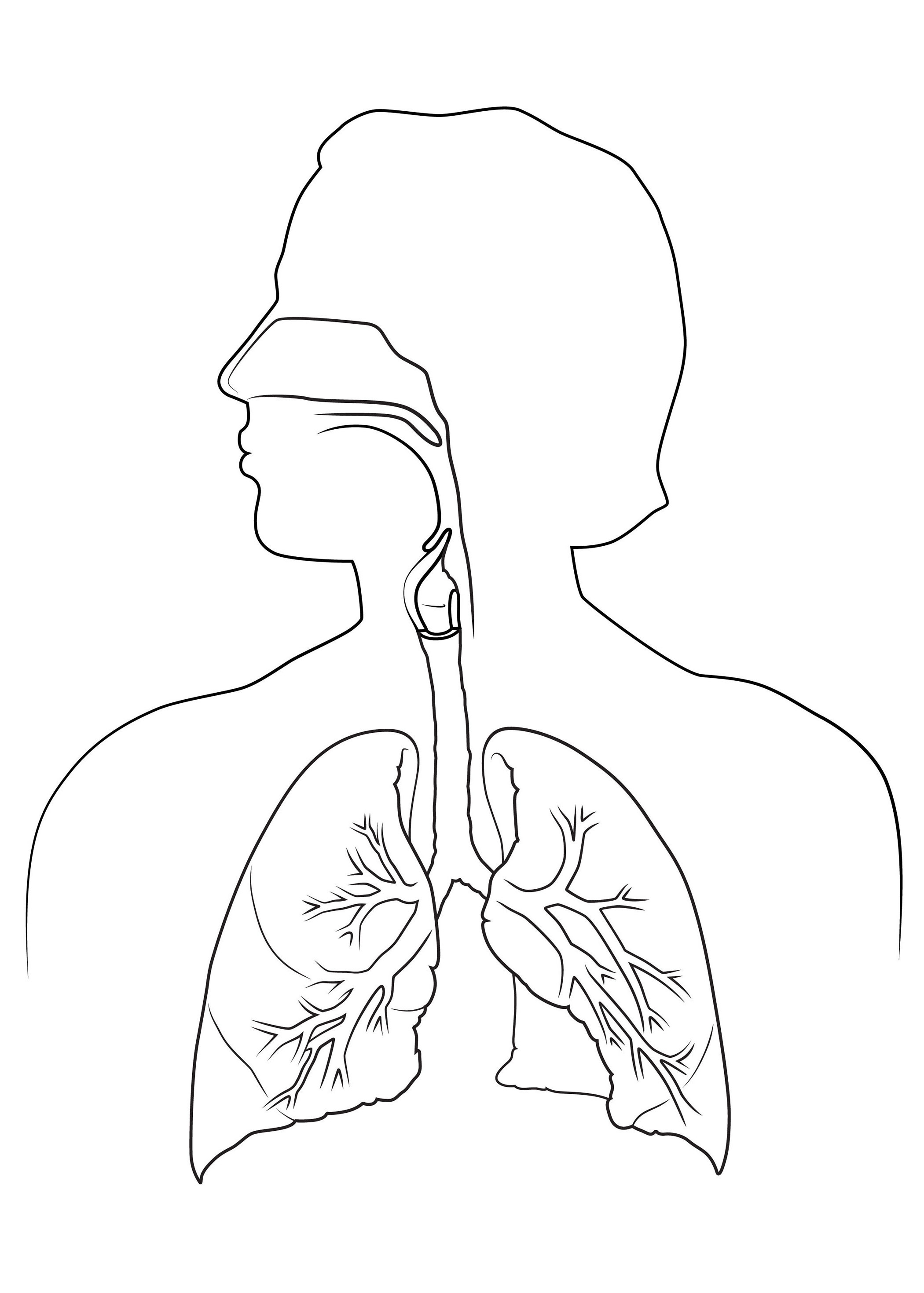 Medical Body Drawing At Getdrawings