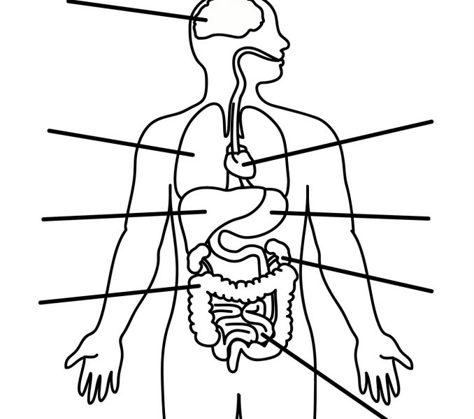 Medical Human Body Outline Drawing at GetDrawings.com