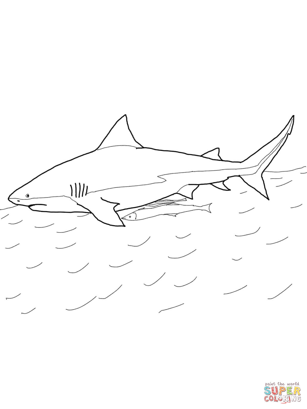Megalodon Shark Drawing At Getdrawings