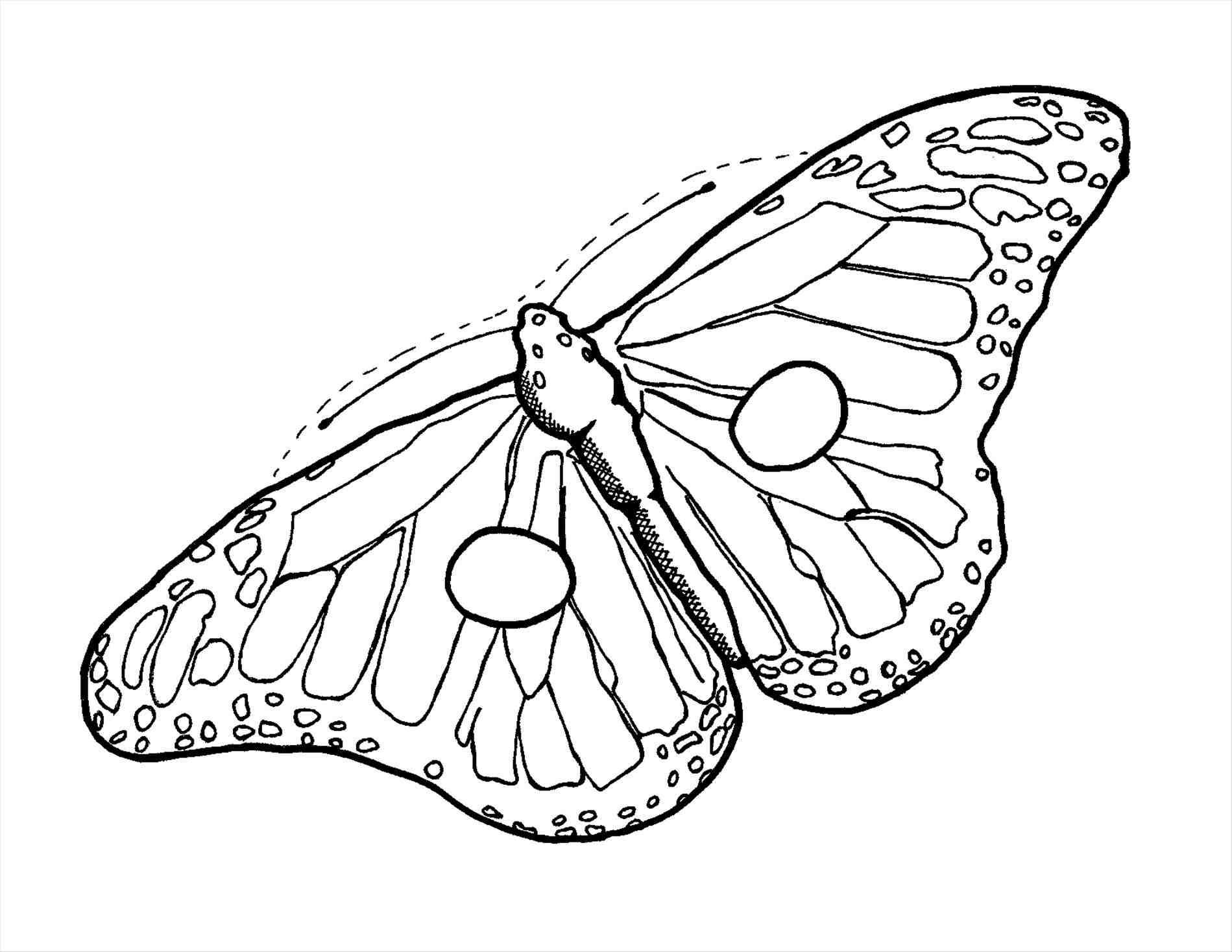 Monarch Drawing At Getdrawings