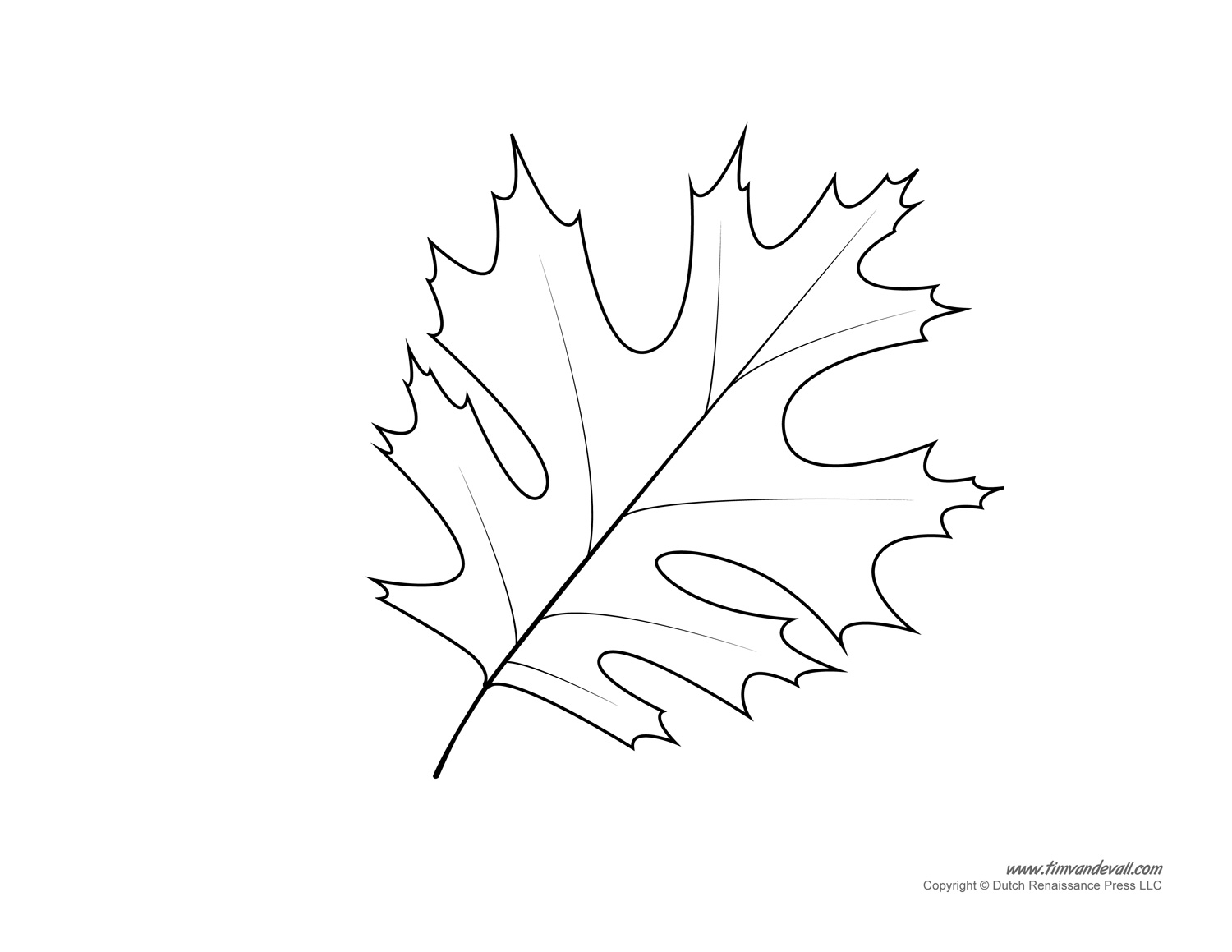 Oak Leaf Drawing Template At Getdrawings