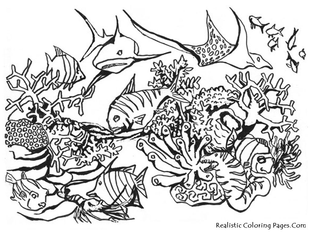 Ocean Ecosystem Drawing At Getdrawings