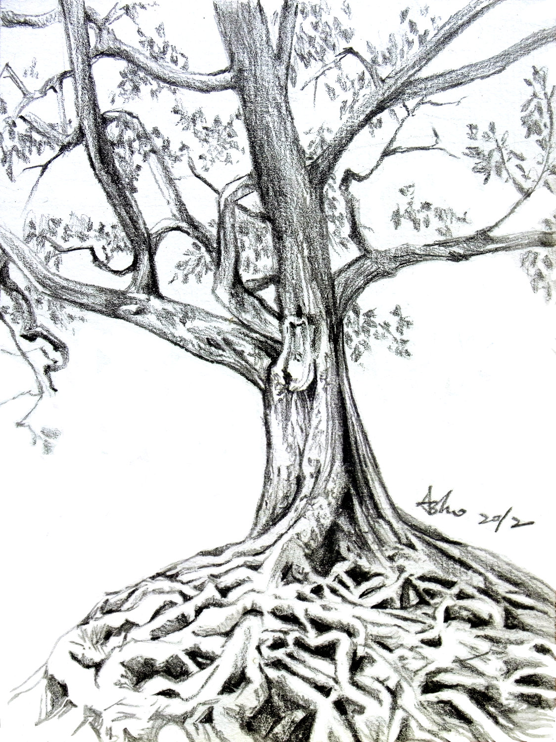 Old tree drawing 14