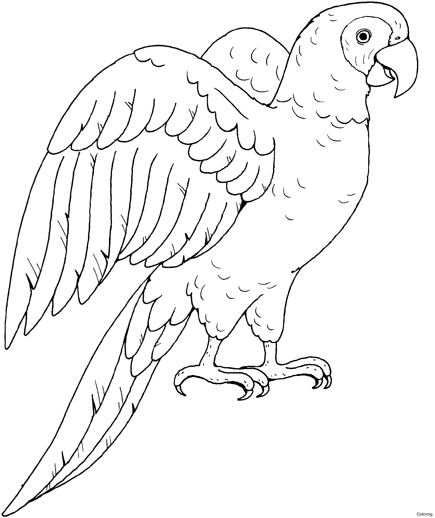 Parrot Flying Drawing At Getdrawings