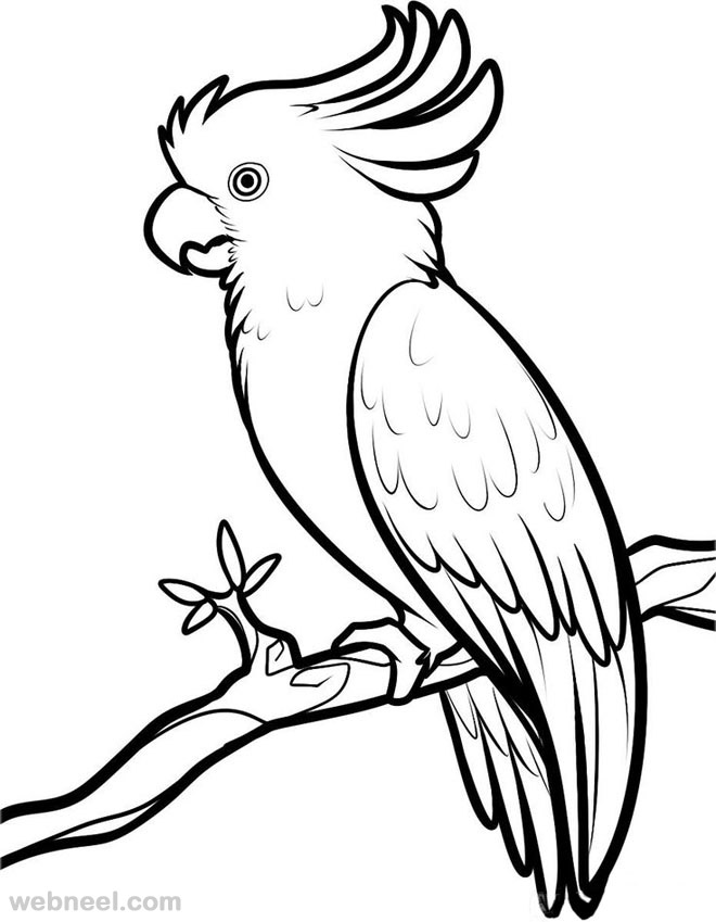 Bird Drawing For Kids At Getdrawings Com