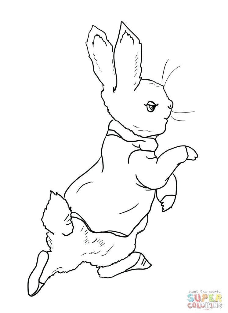 Peter Rabbit Drawing At Free For