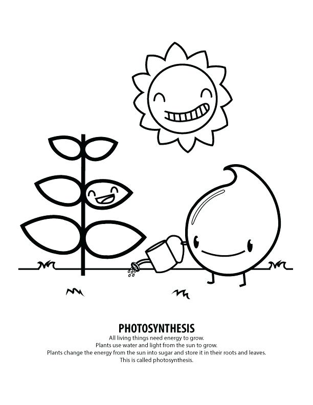 Photosynthesis Coloring Page Printable Sketch Coloring Page