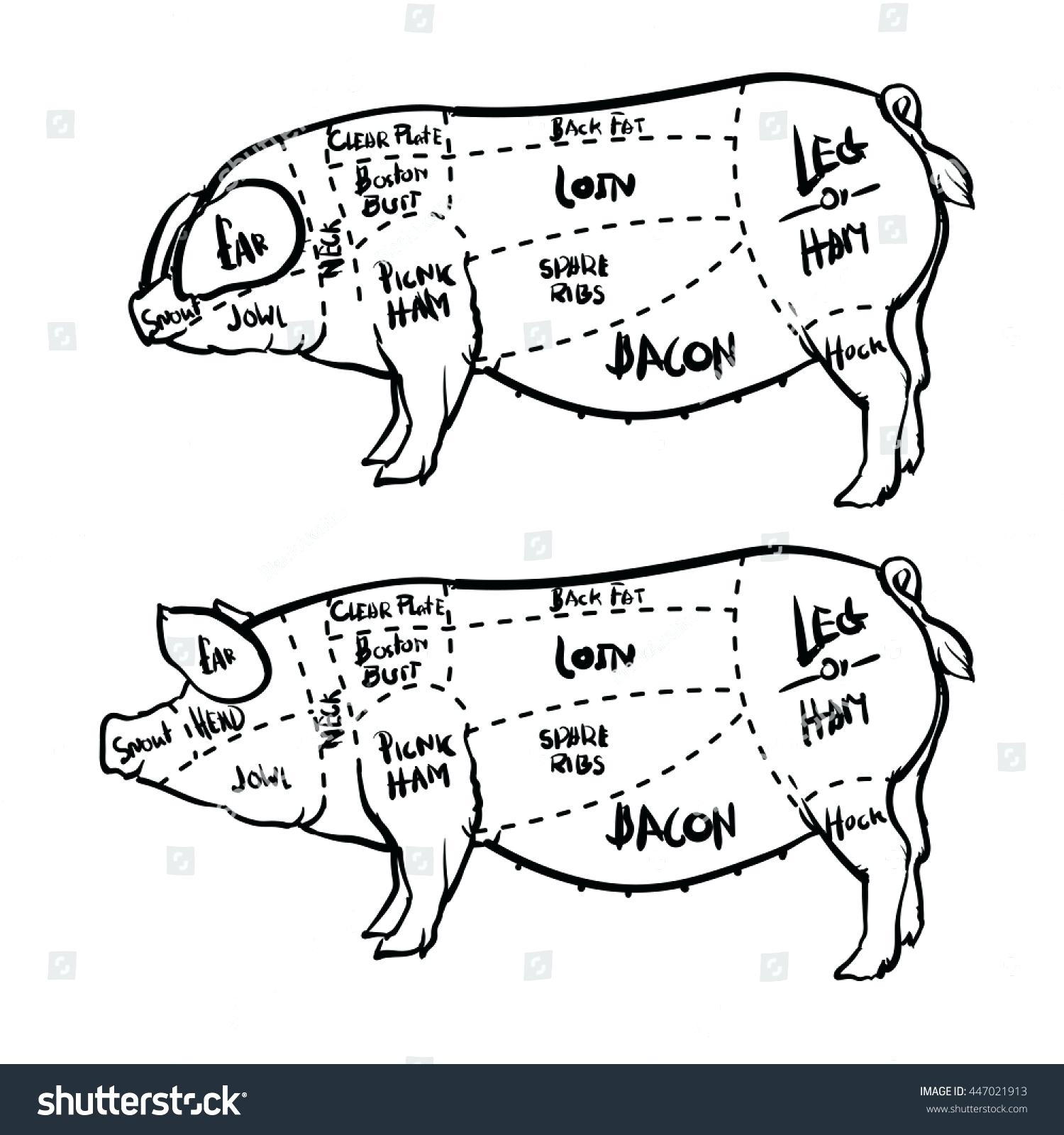 Pig butcher drawing at getdrawings free for personal use pig rh getdrawings blank pork diagram pork diagram cuts