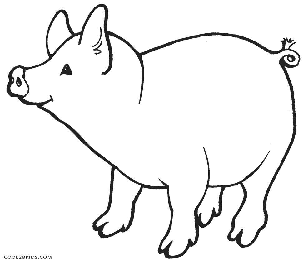 Labeled Fetal Pig Brain Sheep Diagram Scientific Sketch