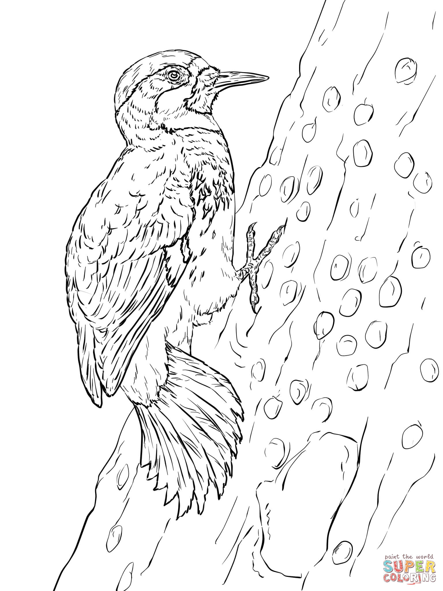 Pileated Woodpecker Drawing At Getdrawings