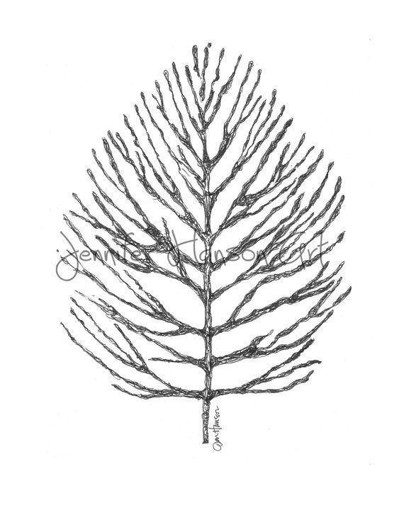 Pine Cone Drawing At Getdrawings Com