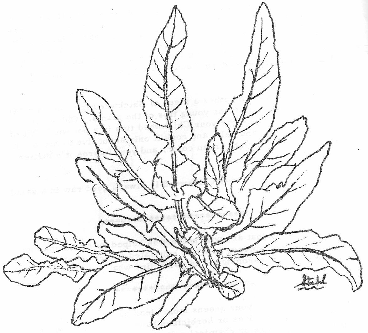 Planting Drawing At Getdrawings