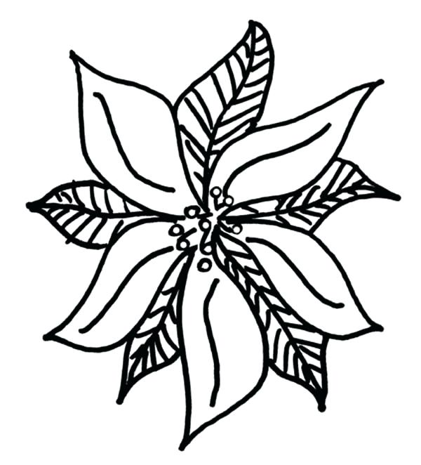 poinsettia drawing outline at getdrawings  free download