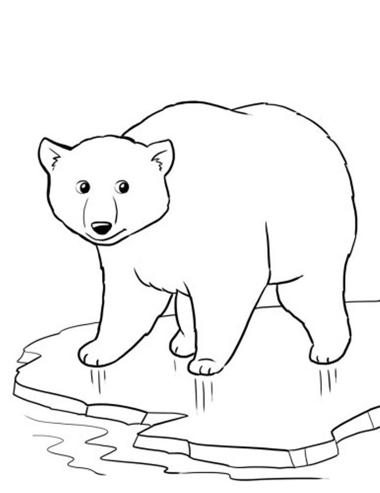 Polar Bear Cub Drawing At Getdrawings Com