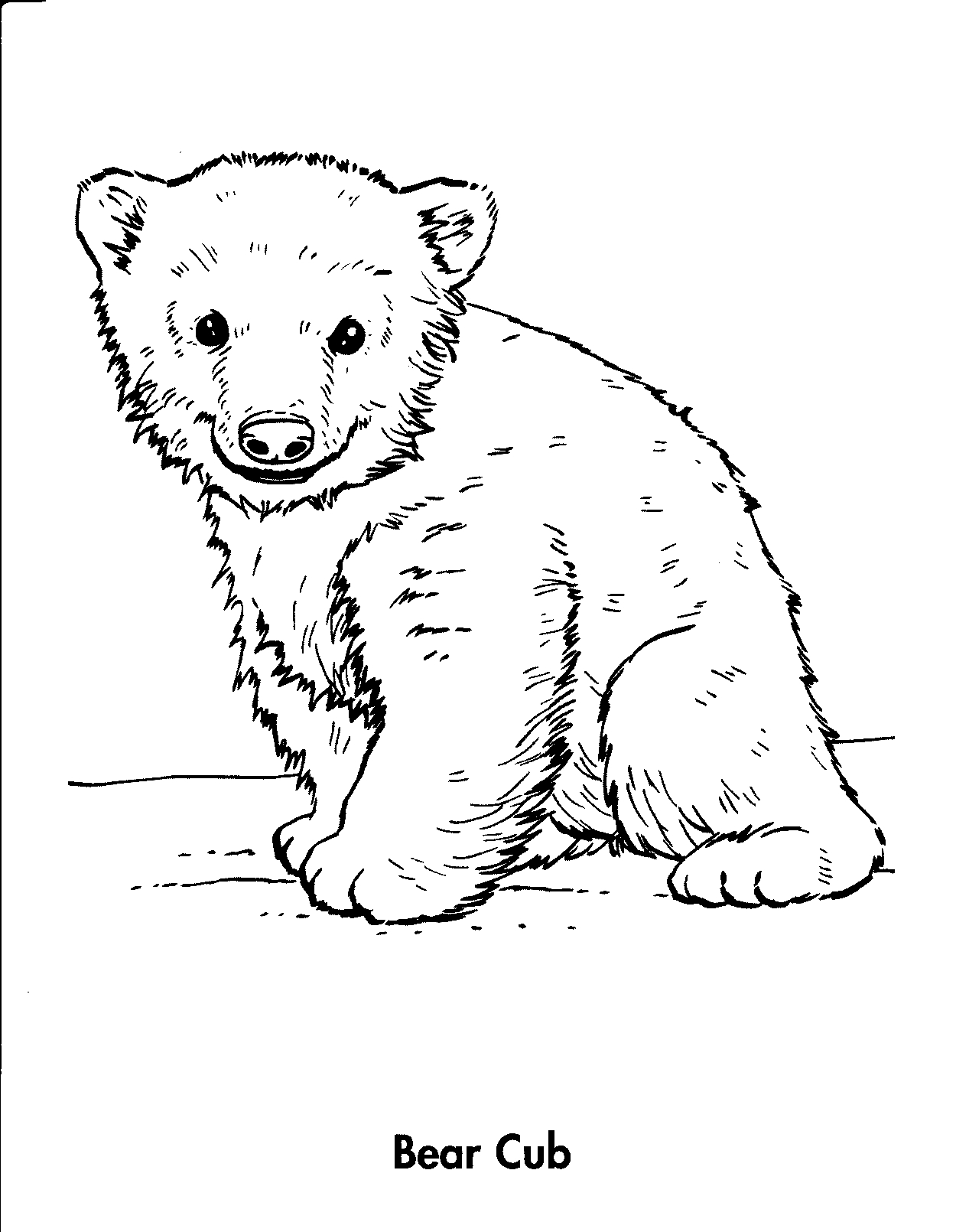 Polar Bear Line Drawing At Getdrawings