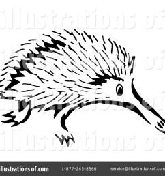 1024x1024 porcupine clipart echidna [ 1024 x 1024 Pixel ]