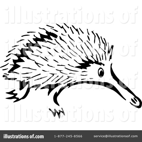 small resolution of 1024x1024 porcupine clipart echidna